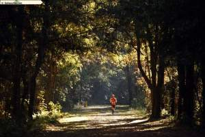 Turkey Trot woods pic