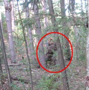 I see Sasquatch! Or do I?....